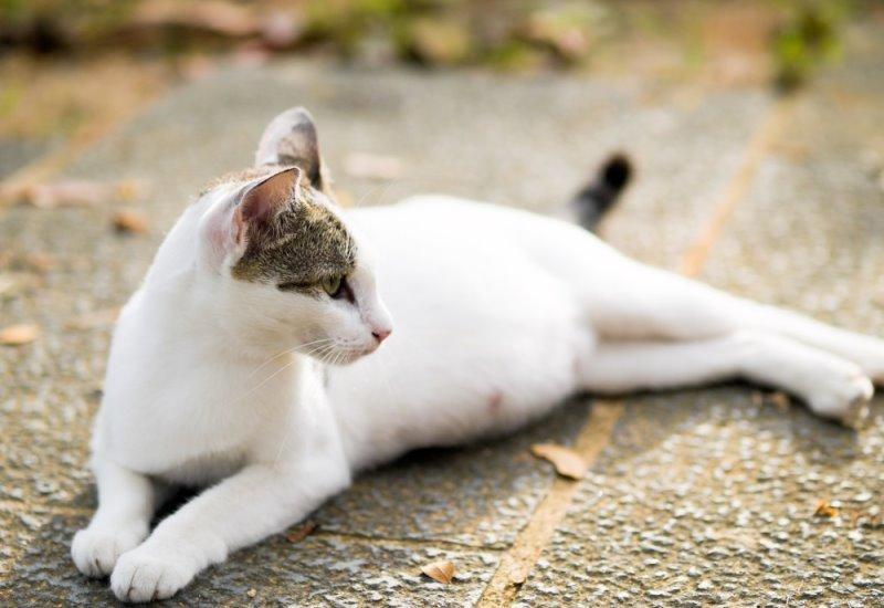 Ли кошка родить мертвых котят. Действия хозяев при рождении мертвых котят