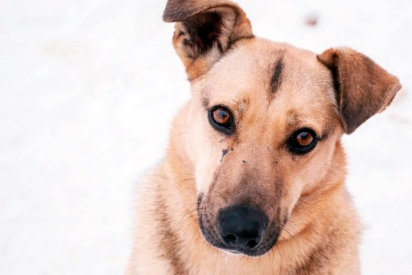 Где у собаки находится сердце: расположение, функции ...