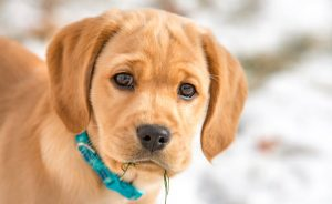 Лишай у собак: фото, виды и лечение в домашних условиях