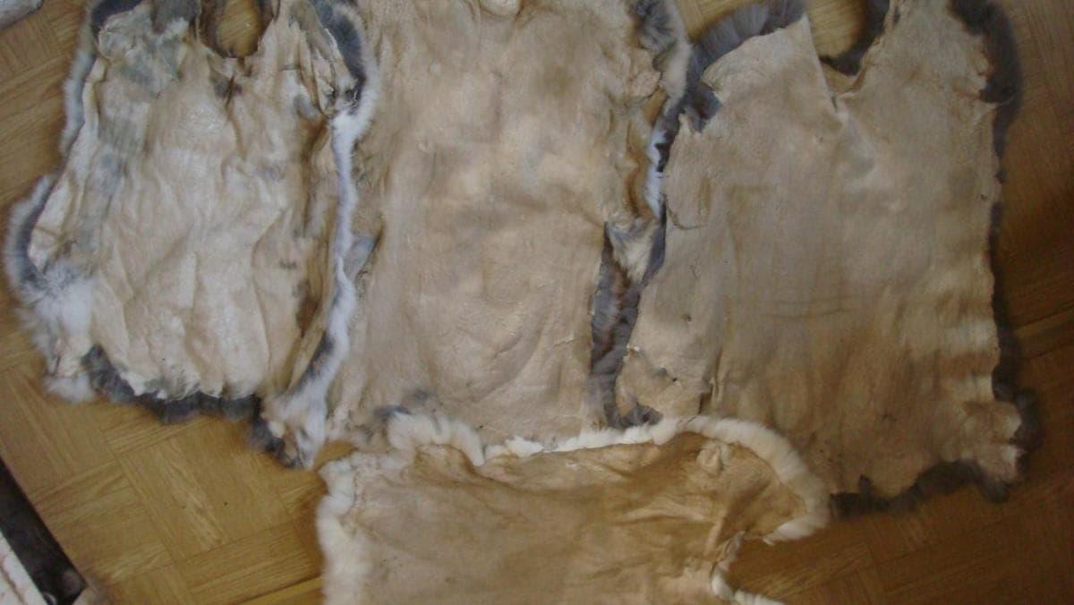Det er manuelt at fjerne produktet fra reglerne, for at håndtere megrinet for lille sandpapir fra tuberkler, uregelmæssigheder. Kæmning pels.