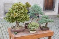 bonsaje-zvolen-zamok-3