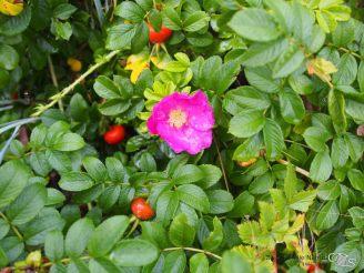 Und schöne Blüten