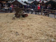 Tierchen auf dem Weihnachtsamrkt