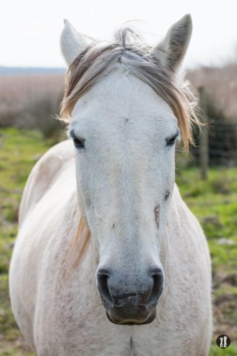 S'Albufera - Pferd Portrait