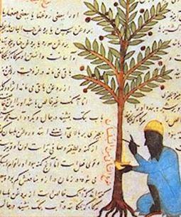 islamic agricolture