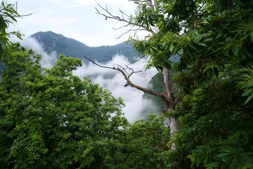 Reisefotos: Wolken im Tal zwischen bewaldeten Bergen in der Nordtosvana
