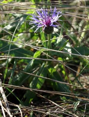 Bella Ciao - in dem Schatten der kleinen Blume