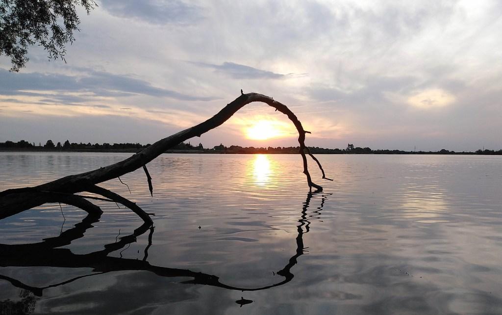 Der Baum im Sonnenuntergang