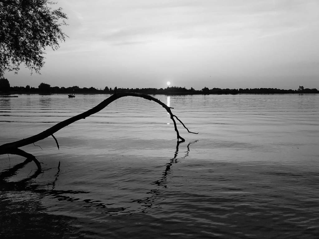 10 Tage Schwarz weiß - mein Lieblingsbaum am Kronthaler Weiher