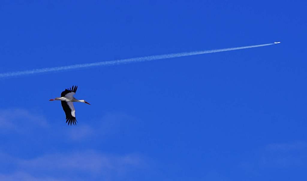 Storch - Flugzeug - schlechte Laune