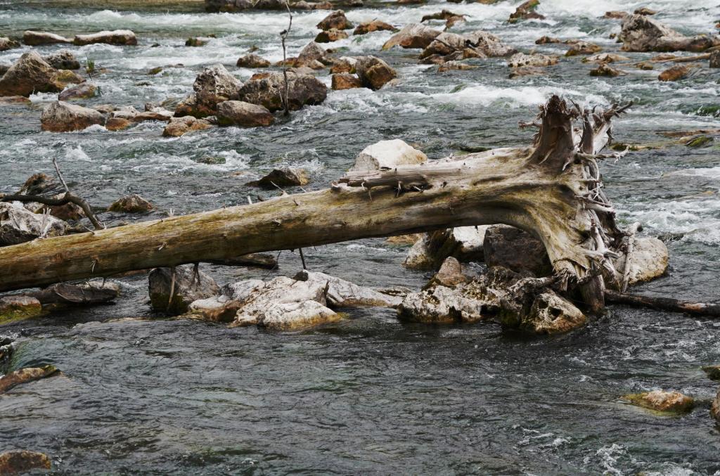 Stamm im Wasserfall