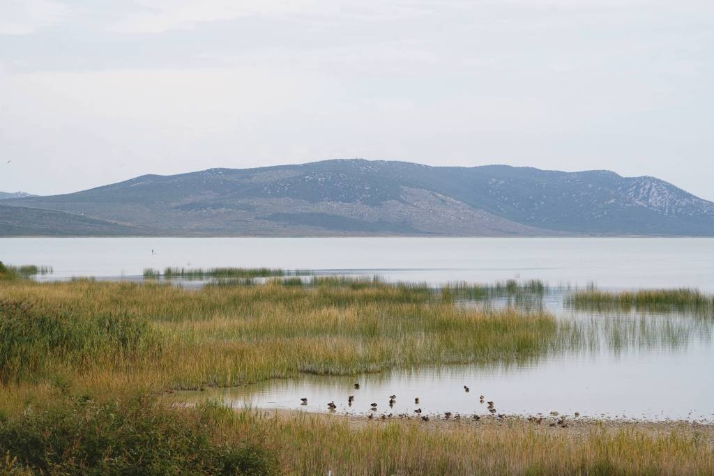 Vogelbeobachtung am Vrana See