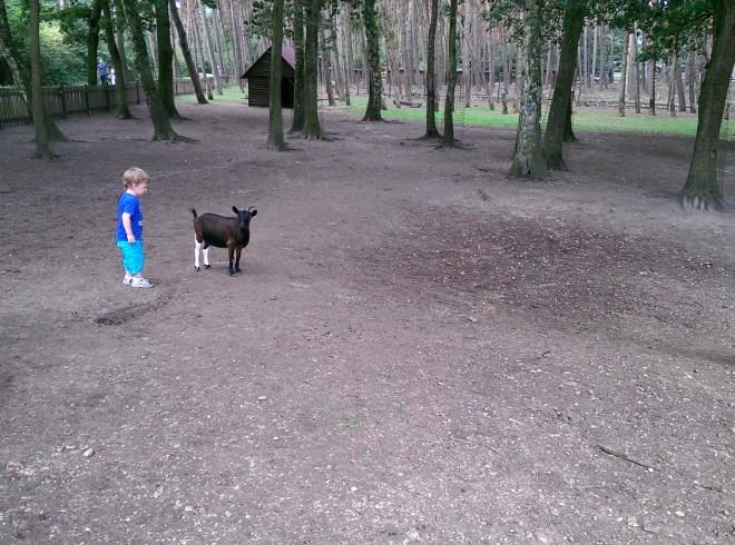 Streichelzoo mit ganz vielen Baby-Ziegen