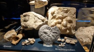 Armfüßer (Brachiopoda) und Schwämme (Spons)