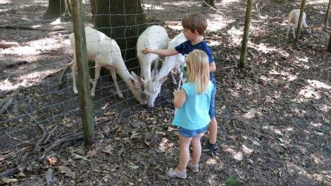 Die Kinder füttern die Tiere
