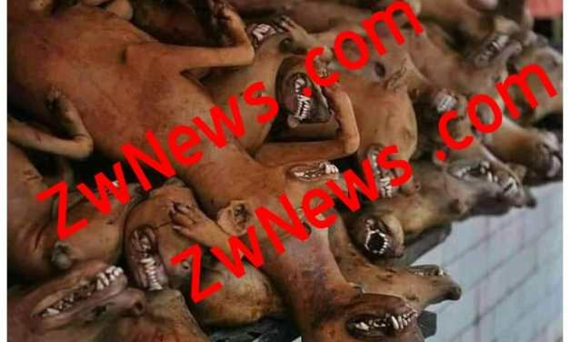 Zanu PF official unknowingly buys dog meat after being told it was from goat