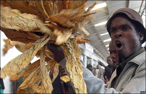 Video: Farmers Jumping Out Of  Their Skins Over low Tobacco Prices