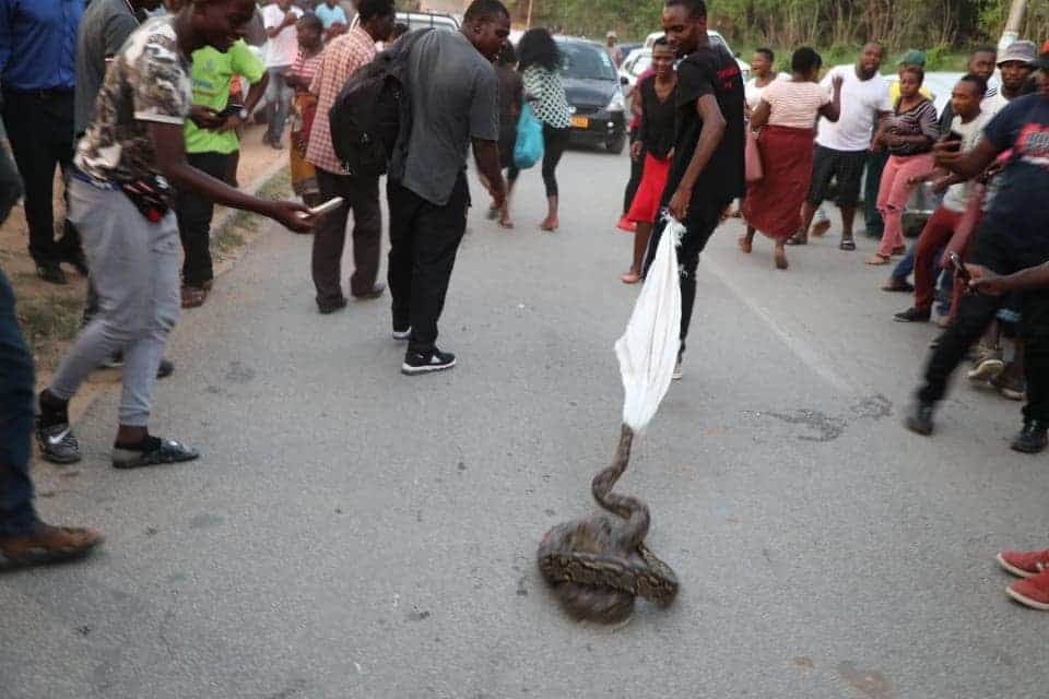 PICTURE: Big snake shock Mutare residents