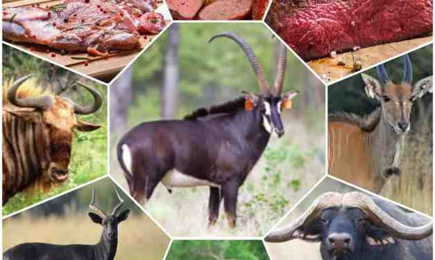Bush meat poaching on the rise