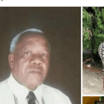 David Mluli(80)dies after all night action with 33-year-old Neema Kibaya at Mbedzi Garden Lodge..PICTURES
