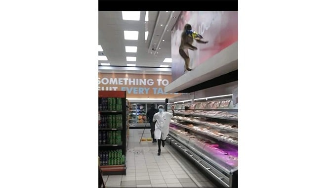 Hungry Baboons Break Into Victoria Falls Supermarkets For Food…PICTURES