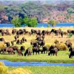 Zambia Court of Appeals rejects appeal barring proposed mining in Lower Zambezi National Park