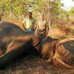 ZimParks to raise US$70 000 per elephant from hunting