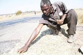 Zimbabwe a 'breadbasket' of the region once again- Nick Mangwana