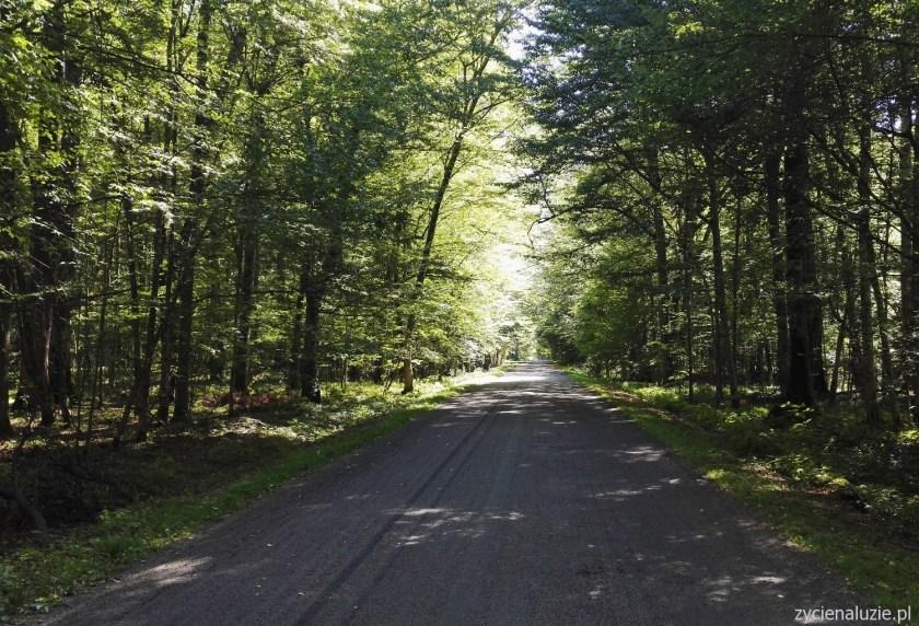 Budy Leśne - droga praktycznie nie uczęszczana przez samochody
