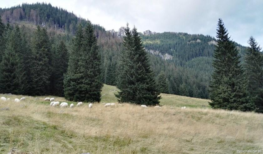 Dolina Chochołowska
