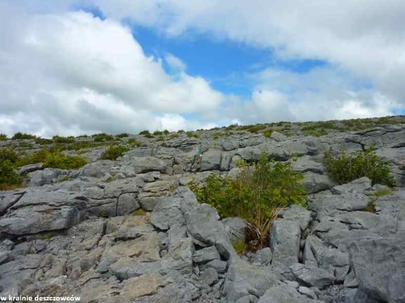 Mullaghmore Loop, Burren (10)