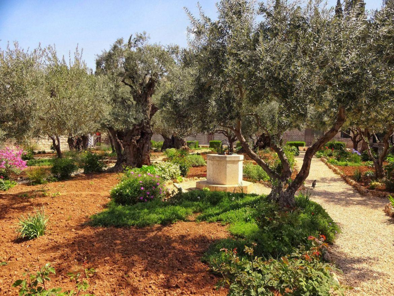 ogród Getsemane Jerozolima Izrael