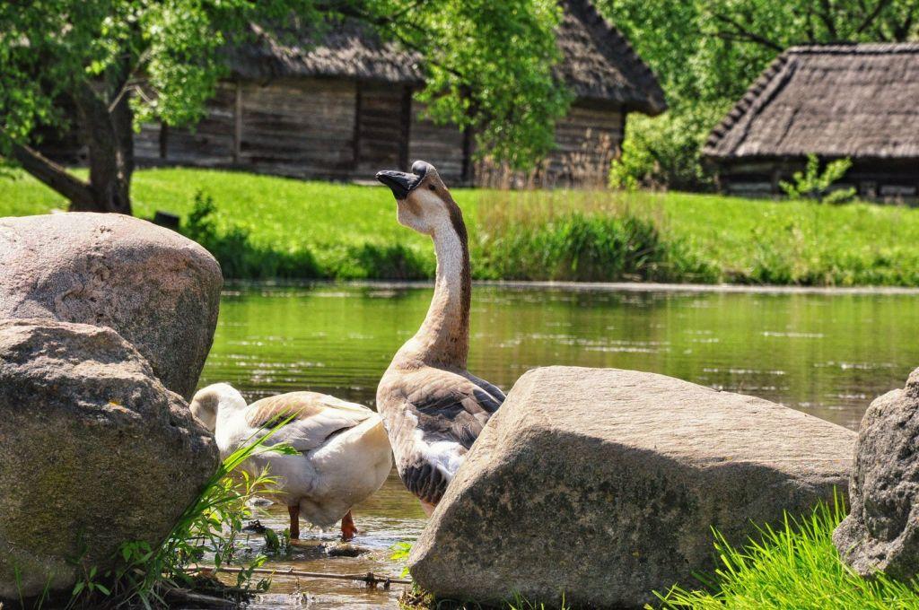 Muzeum-Wsi-lubelskiej-Skansen