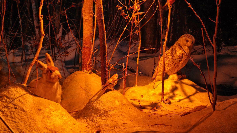 MuzeumPrzyrodniczo-Leśne wieża widokowa białowieża