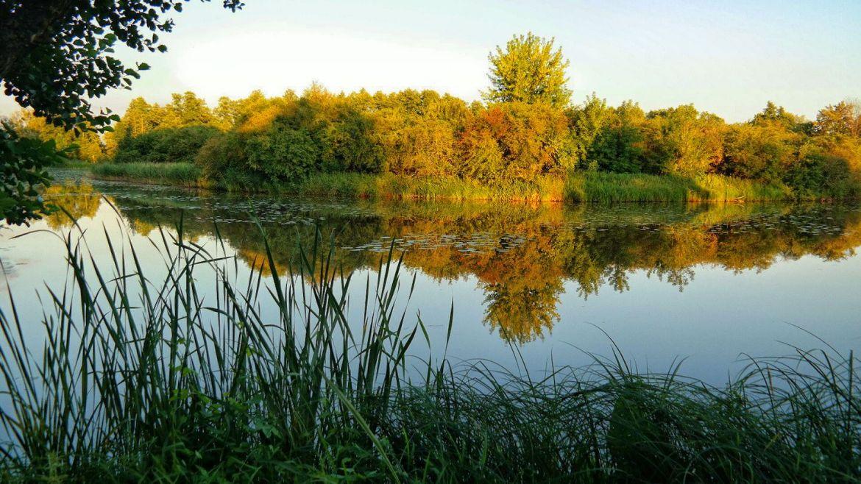 Park Pałacowy Białowieża staw