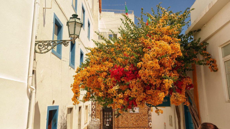 Algarve zachodnie Albufeira Kwiaty Portugalia