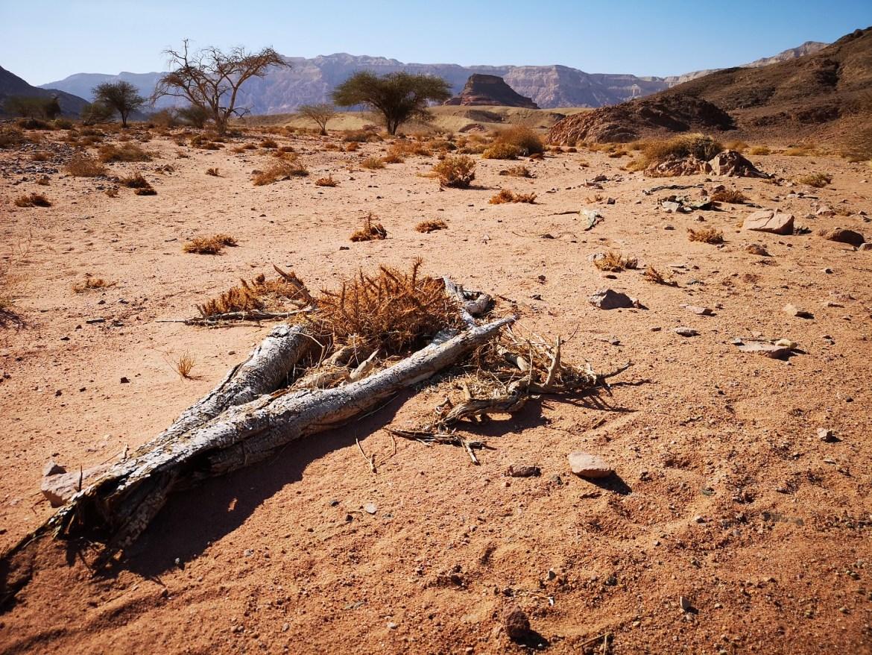 Timna park pustynia Negev Eilat Izrael