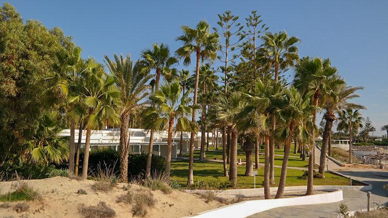 Cypr-Aya-Napa-Plaże-palmy-co-zwiedzić-i-zobaczyć-na-cyprze-blog