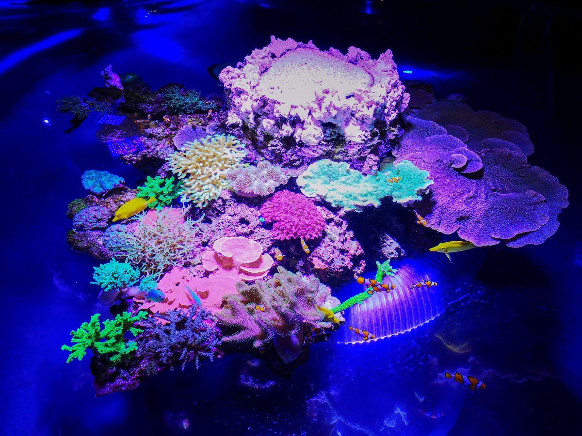Monako co zwiedzić i zobaczyć w Monako monaco oceanarium flora i fauna