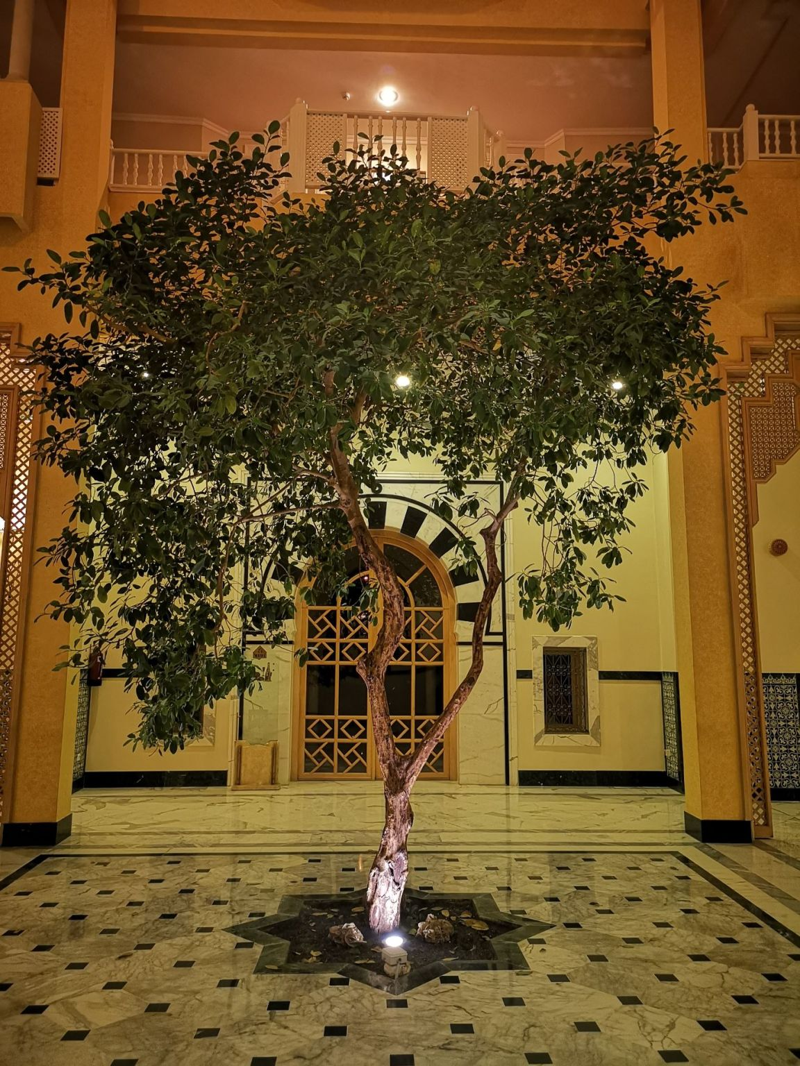 Royal Garden Palace djerba drzewa