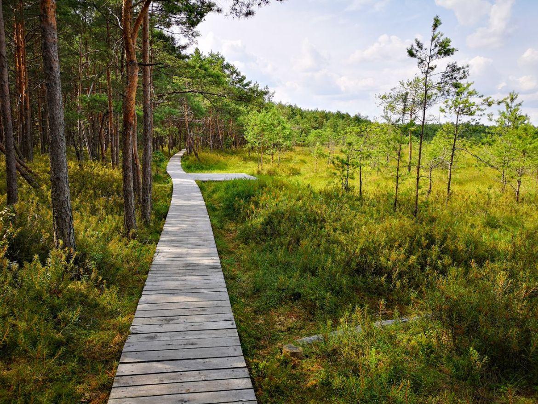 Poleski Park narodowy ścieżka dąb dominik zwiedzanie co zobaczyć blog las