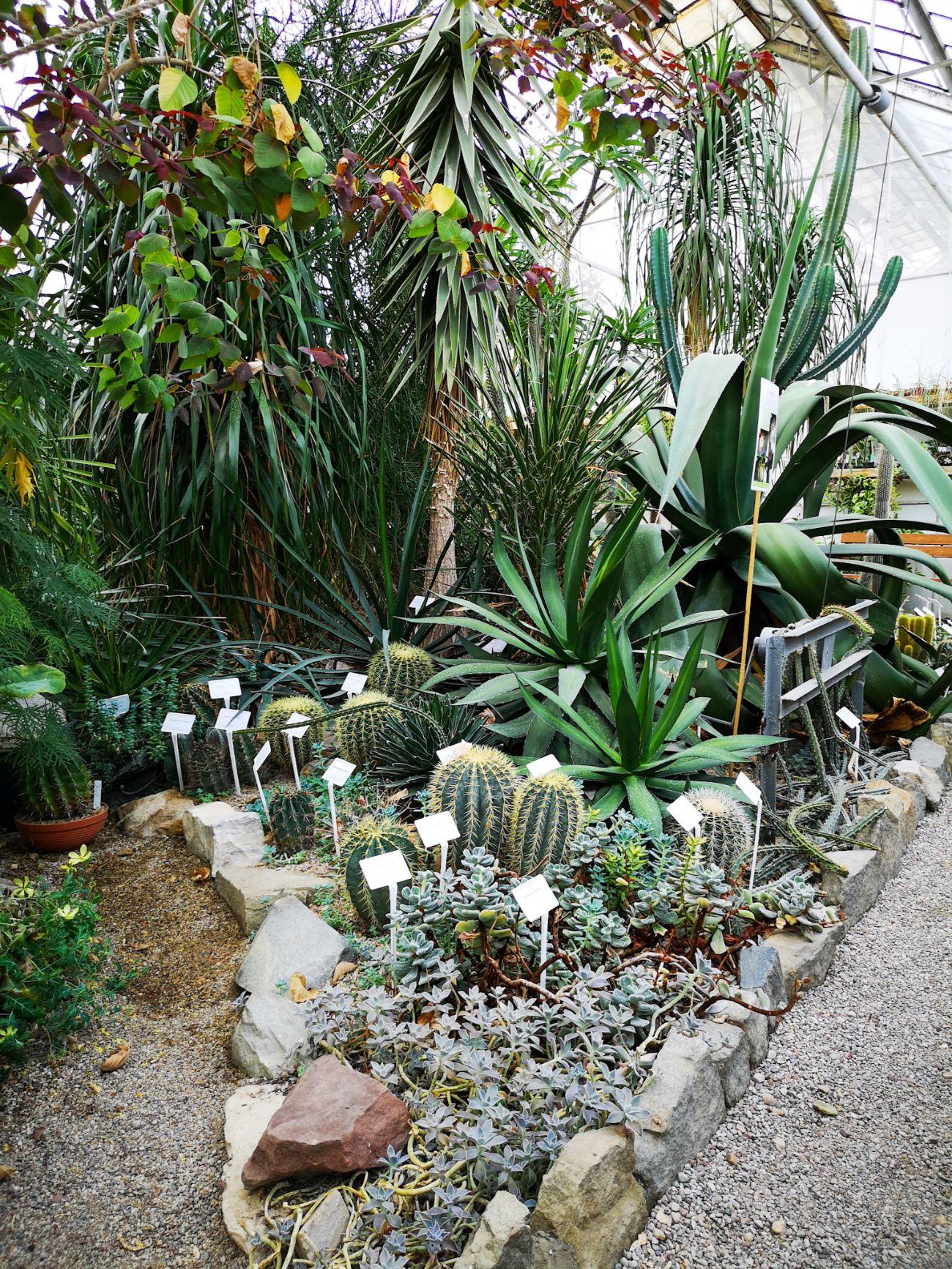 szklarnia sukulenty w ogrodzie botanicznym w lublinie lato w mieście co zwiedzic w lublinie weekend co zobaczyć