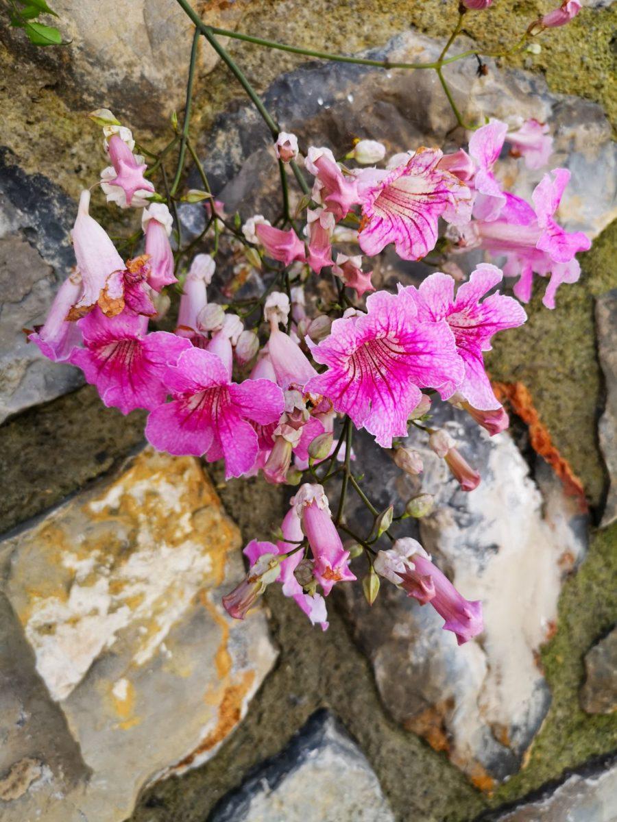 alicante kwiaty hiszpania