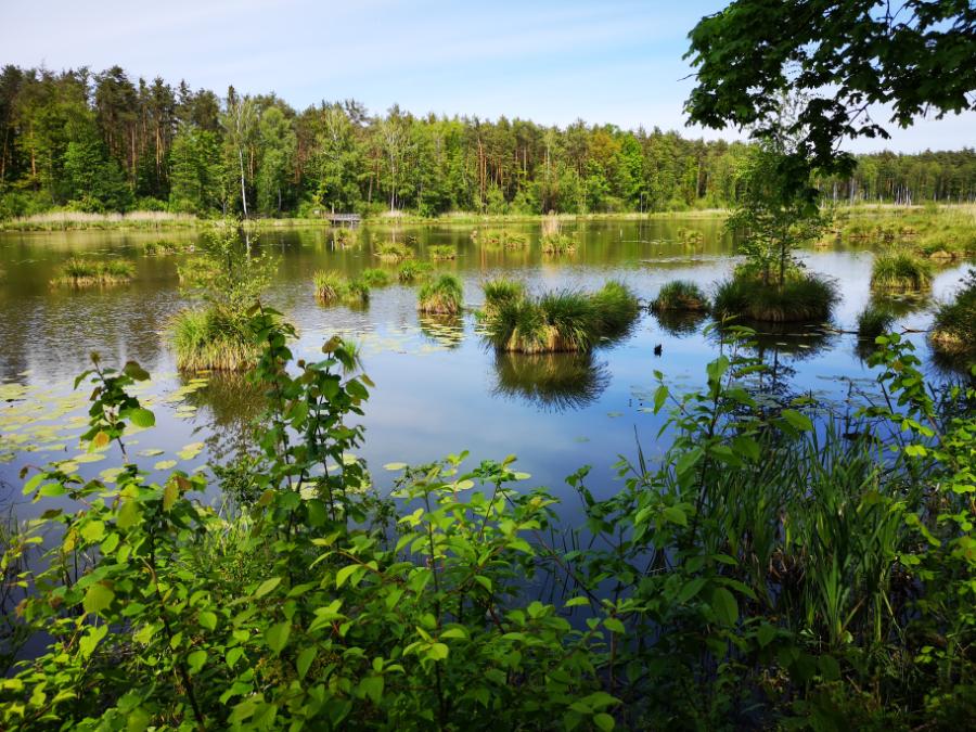 ścieżka przyrodnicza bobrówka lubelskie co zobaczyć z rodziną lubelszczyzna polska kopce