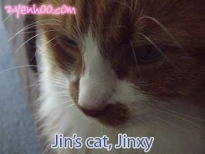 Jin's cat, Jinxy