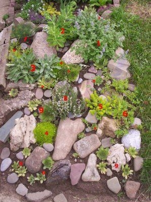 RSimple Rock Garden Decor Ideas For Front And Back Yard 45