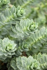 Awesome Succulent Garden Ideas For 2018 17