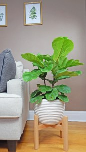 Awesome Stand Wooden Plant Ideas22
