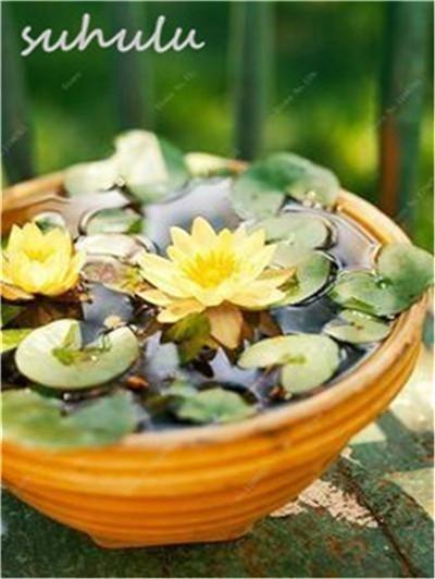 Brilliant Bonsai Plant Design Ideas For Garden04