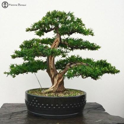 Brilliant Bonsai Plant Design Ideas For Garden06